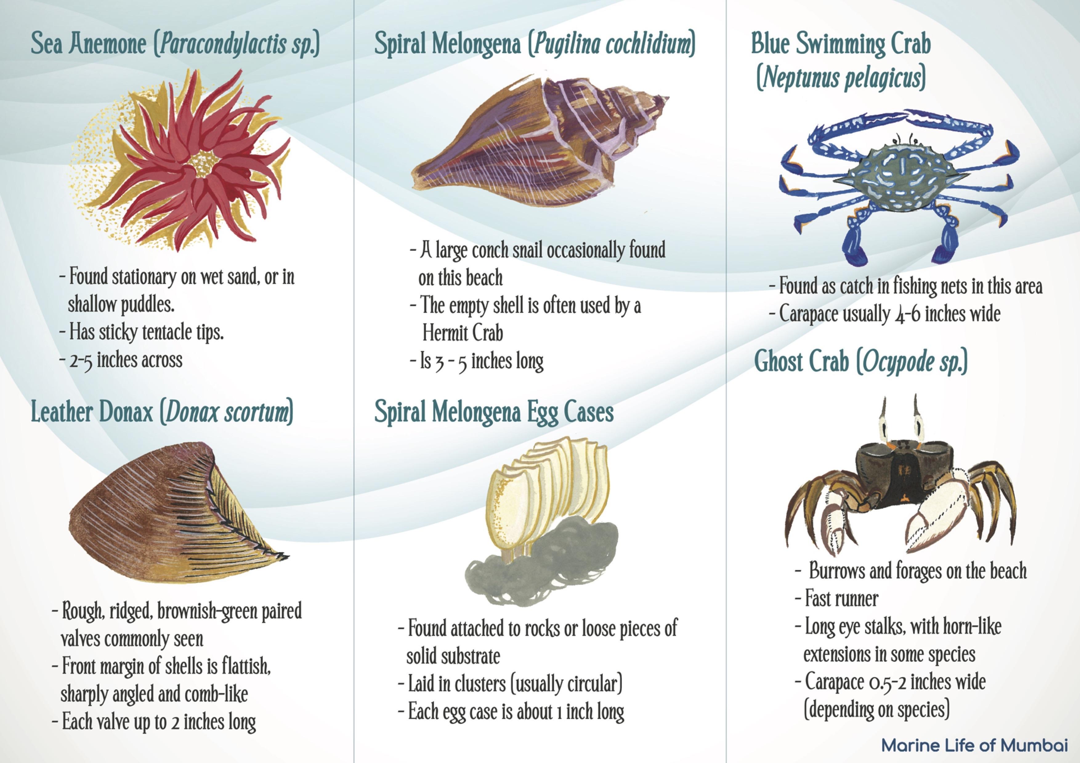 MLOM - Girgaon Field Guide